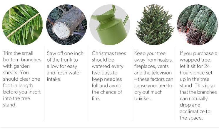 5 Rules for Christmas Tree Prep