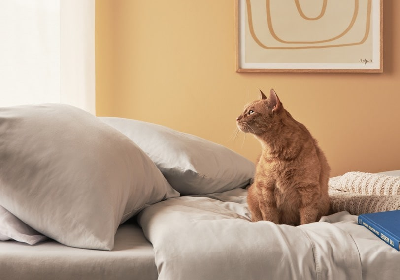 A cat sitting on a bed.